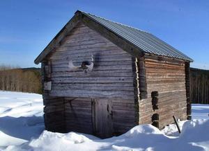 Ladumyråsen har rötter  i 1700-talet och Ladumyrättlingar  i Amerika har kommit för att titta närmare på det här härbret på Torbjörn Starkmans gård.