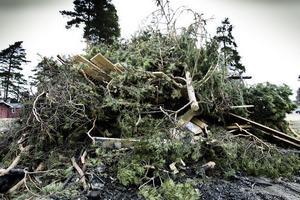 Här växer en av Hudiksvalls majbrasor fram. Förhoppningsvis blir det en miljövänlig sådan.