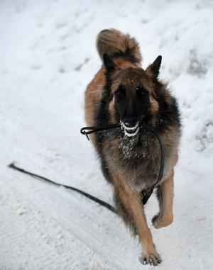 Hundar reagerar på olika sätt när de blir rädda. Vissa kan försöka fly och andra får hjärtklappning.