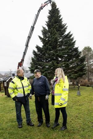 Så var det gjort. Nu ska granen bara lyftas bort från stubben, då kommer decembersolen förhoppningsvis att lysa på oss igen, säger Hans-Erik Olsson, till Sonny Andersson och Linnea Lång från gatuavdelningen på Sundsvalls kommun.