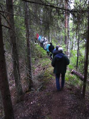 Svensk djungel. Djupa raviner på var sida om stigen gör det extra spännande att ta sig ut till slogboden i Djupbäcka.