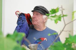 Jan-Åke Svedbergs papegojor blir sams efter att ha varit lite putta på varandra.