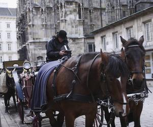 Hästdroskor väntar utanför Stefansdomen i Wien.Foto: Hélène Lundgren