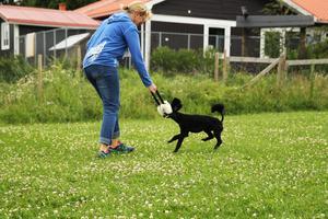 – Träningen ger så mycket tillbaka eftersom man märker hur mycket det ger hunden, säger Malin Tangfelt, agilitytränare.