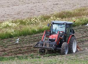 Magnus Andersson kupar jorden med traktorn för att ge potatisarna luft och rensa bort ogräs.