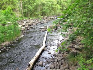 Träd fälldes i Testeboåns naturreservat och användes till att bygga ett jakttorn.