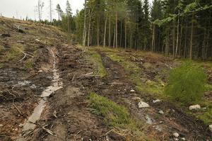 Fint iordningställd stig och vandringsled, eller förstörd skogsmark? Meningarna går isär.