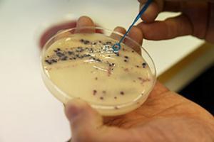 Antibiotikakurer bör kosta mer för att förebygga resistens.