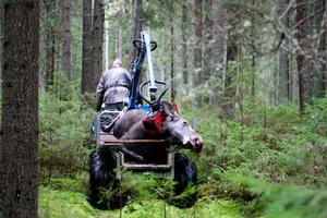Höst och viltolyckorna ökar. Samtidigt finns det jägare som vägrar eftersök av trafikskadade djur.