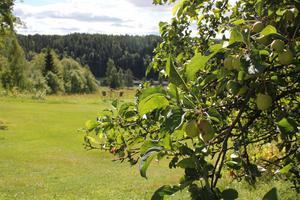 Cissi Jakobsson gillade sitt första sommarjobb som skogsplanterare. Ibland tänker hon att det hade varit kul att göra igen.