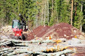 I april i år hade arbetet med att röja bort kisaska och sly vid banvallen mellan Bergvik och Vannsätter påbörjats.