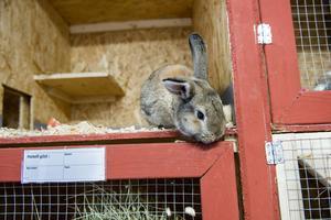 Kaninen på bilden har ingenting med ärendet att göra.