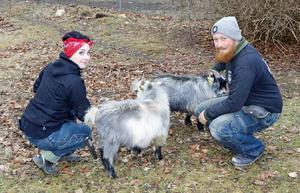 Ebba och David har många djur. De afrikanska dvärggetterna Leif och Billy får strosa runt på tomten.