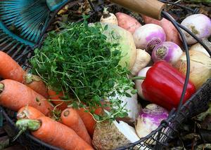 Första november är det internationella vegandagen. Gör som Henrik Scheutz och välj en vegetarisk livsstil. Foto: Dan Strandqvist