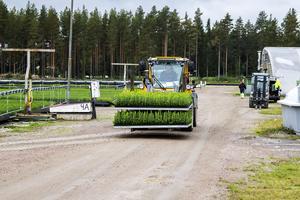Älmfors Plantskola väster om Edsbyn.