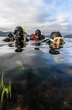 Naturdyk innebär dyk överallt där det finns växtlighet och liv att titta på. Foto: Robbin Norgren