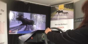 SA:s reporter körde in i baken på älgen vid en provkörning i simulatorn. Bilens hastighet på svårt vinterväglag hade då höjts från 60 kilometer i timmen till 80 på en 90-sträcka. Foto: Privat