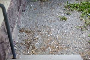 I gruset på baksidan ligger glassplitter.