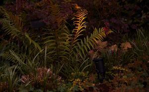 Vackra detaljer i trädgården kan med fördel lysas upp av en spotlight. Bild: Andreas Hillergren/TT