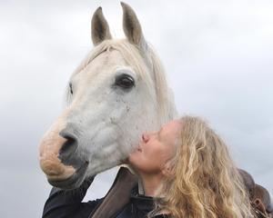 Jeenial ox från Övre Gärdsjö i Rättviks kommun, tillsammans med Ylwa Woxmark. Jeenial ox kommer att medverka i Stockholm International Horse Show denna vecka.Foto: Lucky Rider