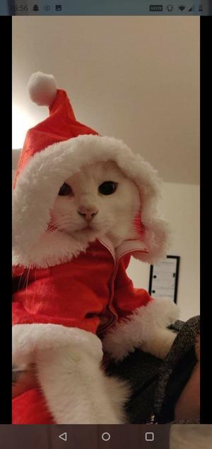 307) Majleif i sin fina tomtedräkt julen 2018. Mindre nöjd men gud så söt Foto: Linda Persson