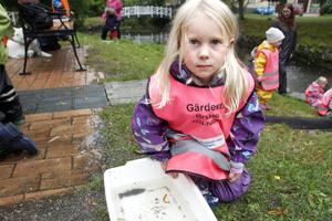 """""""Det var jätteroligt att vara med. Fisken var hal"""", säger fyraåriga Ines Landin som passade på att klappa en abborre."""