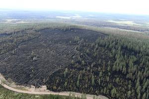 Utbränd skog på skjutfältet.