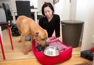 Dina plockar fram bädden och leksakerna som Bailey skulle ha. Billie som är husses hund har tröstat matte.