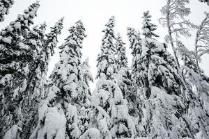 I Sörskog finns det nästan alltid snö, även om det är barmark i Falu stad.