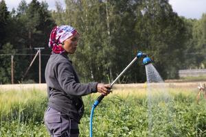 Msyana Mosos har utvecklat sin svenska sedan hon började arbeta på odlingen.