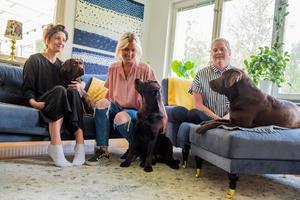 Alla tre labradorer kommer från samma uppfödare i Domsjö, Helén Svanlund. Justine och Umbra blev båda utvalda som bästa exemplar i sina kullar och åker titt som tätt på utställningar med uppfödaren.