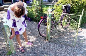 I sommar ska grinden skrapas och målas. I lila förstås.