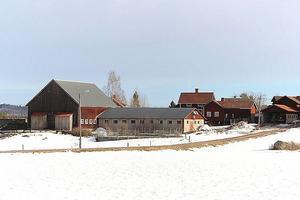 Dalagård med två bostäder, belägen i byn Almo med närhet till Siljan genom Alviken. Gården har konverterats från att tidigare varit en mjölkgård till att nu föda upp kvigor till mjölkproduktion och stutar. Foto: Björn Målsäter