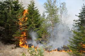 Det råder eldningsförbud i tio dalakommuner just nu.Foto: Jørn Bærheim / Scanpix NORGE / SCANPIX