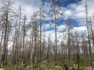 Så här såg det ut i Hälleskogsbrännan nu i somras, i juli. En bussutflykt hit kan vara ett exempel på vad pensionärsorganisationens lokalföreningar kan söka pengar till.