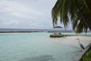 Runt hela ön Ellaidhoo fanns vågbrytare för att skydda mot erosion