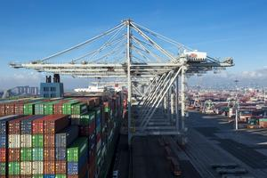 Två kranar, som de här kranarna i Rotterdam, ska sköta lyftet av godset i Norvik. Foto: Hutchison Ports