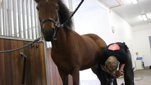 Johannes Sandsten driver nu sitt eget hovslageri, Atlas hovslageri. Han har även egna hästar, bland annat Meyja.