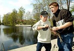 Foto: LARS WIGERT Första fisken. Kristoffer Hedman drog upp en regnbåge ur Dal-Brittas damm när ungdomsfisket startade på måndagen. Kompisen Richard Rydén hjälpte till att få loss fisken från kroken.