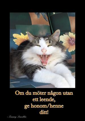 Zorro, familjens lurvtuss som ser till att alla mår bra. Även katter kan le ;-) Bild: Lotta Sandlin