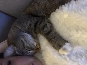 196) Detta är Bumbo, vår fina kattkille. Bilden beskriver honom perfekt, han är otroligt tillgiven & gosig . Han brukar tvätta näsan på den som gosar med honom . Foto: Helena Nordin-Lagerqvist