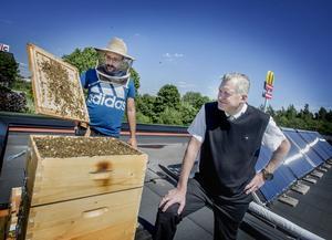 Vd:n Magnus Pojen och biodlaren Stefan Theologou (t.v) visar de runt 50 000 bin som nu huserar på taket till McDonald´s  i Västhaga.