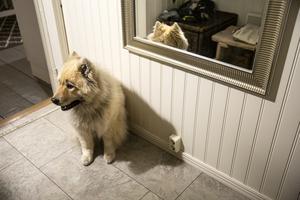 Hunden Hachi är stressad och har börjat flämta. Utanför hörs hög musik från en bil som har parkerat på en parkering ungefär 90 meter från huset.