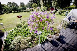 I trädgården finns både blommor och bärbuskar och på verandan tomater. När NA är på besök har paret Jacobsson haft besök av rådjur under natten, som ätit upp knopparna på pelargonerna på framsidan.