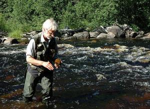 """Algexpert. På varje sten i vattnet finns en tunn hinna av alger. Alger kan enligt Roland Bengtsson användas för att spåra metallföroreningar. """"Kiselalger är mycket bra indikatorer på vattenkvaliteten"""", berättar han. Dessutom kan kiselalger användas i kriminaltekniska sammanhang och visa om en död person som hittats i vatten har drunknat eller dött på land. Foto: Björn Nyström"""