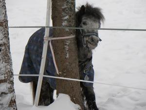 Garpenbergs Herrgård. Jag var med jobbet på utbildning och mittemot herrgården stod denna lilla häst i hagen. När jag tog fram kameran blev han lite blyg och försökte gömma sig bakom trädet.