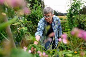 Solleröärten är Agneta Magnussons favorit, om hon tvingas välja bland 30-talet sorter i sin trädgård.