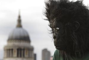 En man i gorilladräkt väckte en kvinna i Gävle. Bilden är tagen i ett annat sammanhang.