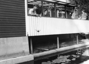 Ort: Småströmmarna, Skog   Rubrik: Kräftfiske direkt från huset!   Bildtext: Manne och Berta Inglund behöver bara luta sig över verandaräcket för att sätta ut kräfthåvarna.