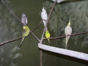 Några av Kvinnerstaskolans fåglar.